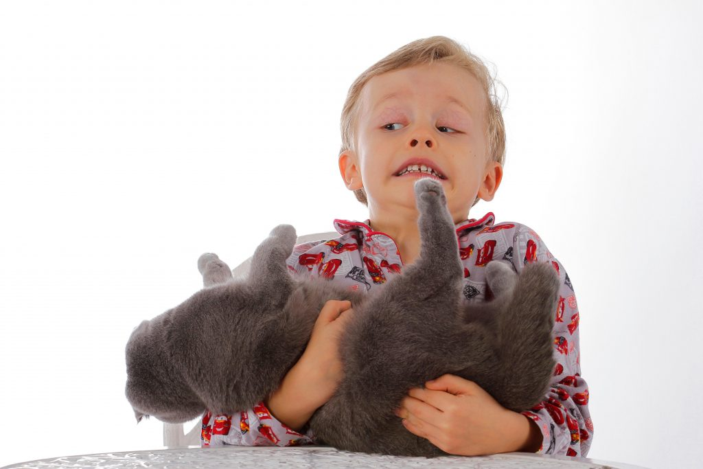 Não corte o cabelo de gatos