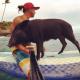 Pig Star, os porcos mais famosos do Instagram!  / Imagem 1