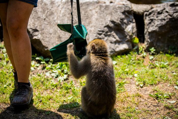 animais ladrões: o macaco